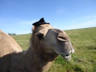 バカ大生camel.jpg